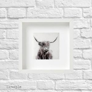 Highland Cow<br/>Framed Glass