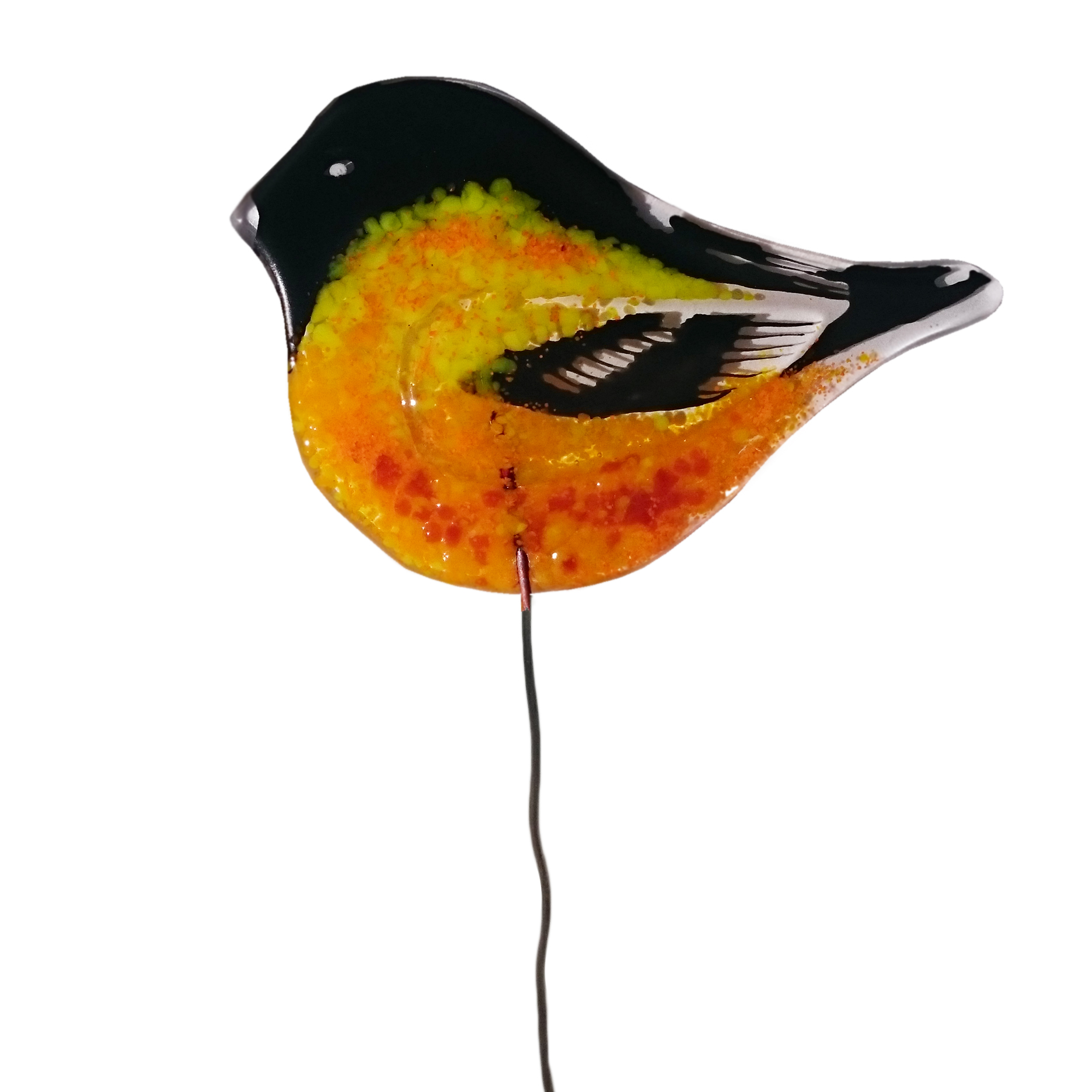 colourful-sparrow-birdie